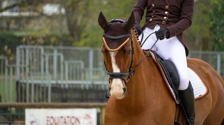 #équitation_tipaza